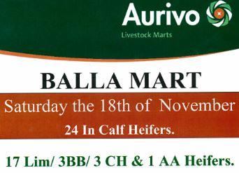 24 In calf heifers at Balla 18th Nov
