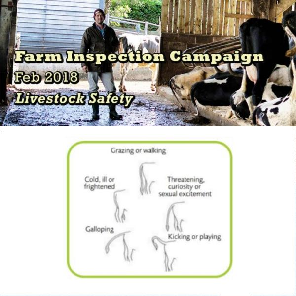 Health and Safety Authority farm campaign to focus on Livestock Safety
